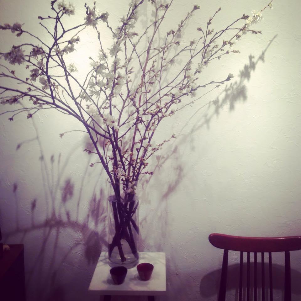 ソメイヨシノと桜の盃